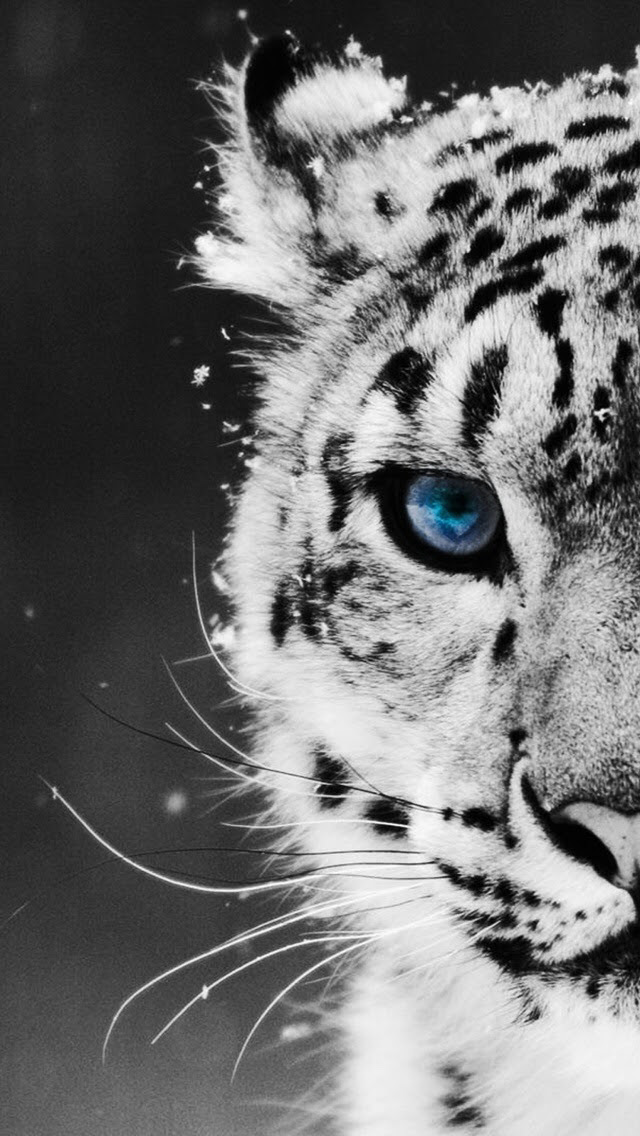 Download 76 Koleksi Wallpaper Tumblr Animals HD Terbaik