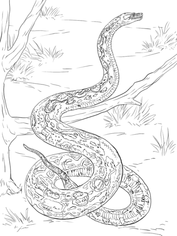 Disegni Di Serpenti Da Colorare Pagine Da Colorare Stampabili