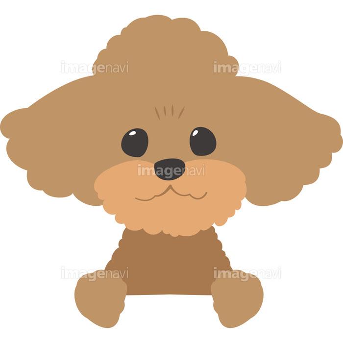 ひょっこり顔を覗かせる犬トイプードルの画像素材31278092