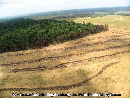 Imazon: Desmatamento na Amazônia em janeiro aumentou 6% em relação a janeiro de 2012