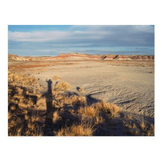 Desert Wave: Petrified Forest National Park Post Card
