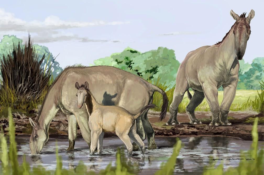 Ilustração do Museu Americano de História Natural mostra representação da macrauquênia, animal 'mais estranho já descoberto', segundo Darwin  (Foto: Jorge Blanco / American Museum of Natural History / AFP)