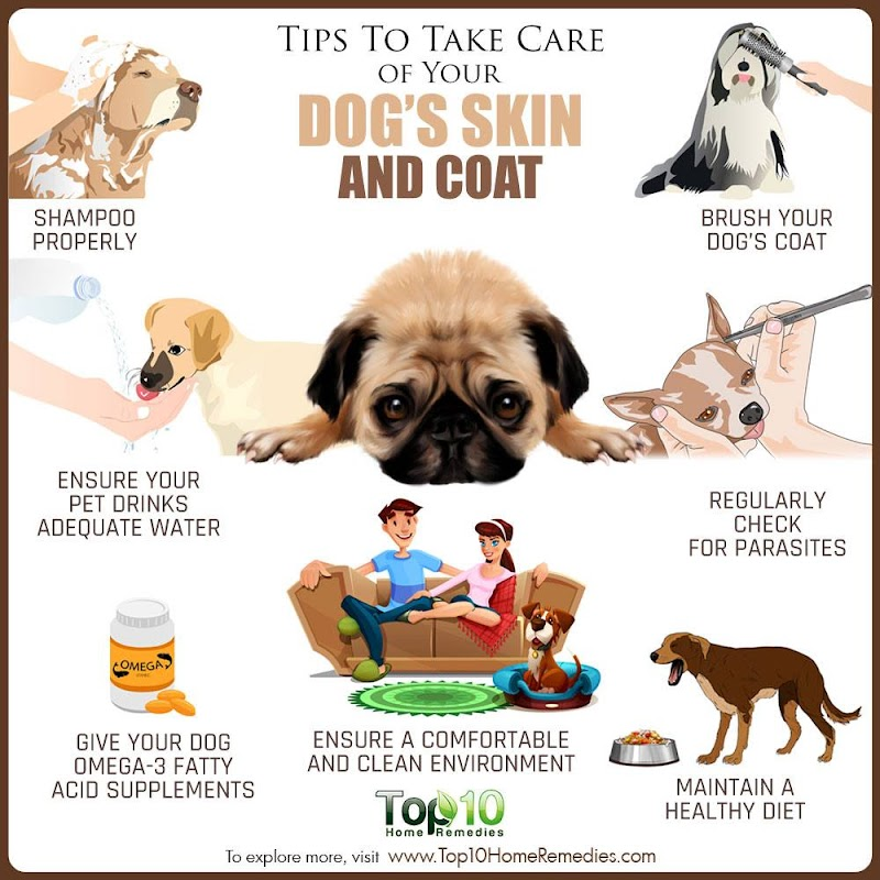 Tips to Take Care of Your Dog's