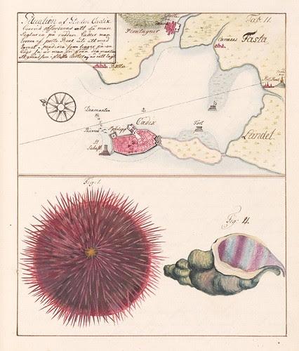 Cadiz map + sea shell + urchin