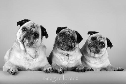 Terror Trio by Megan Lorenz