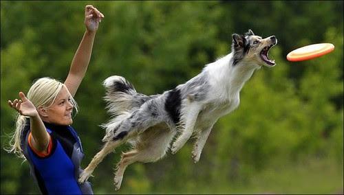 Dog frizbee