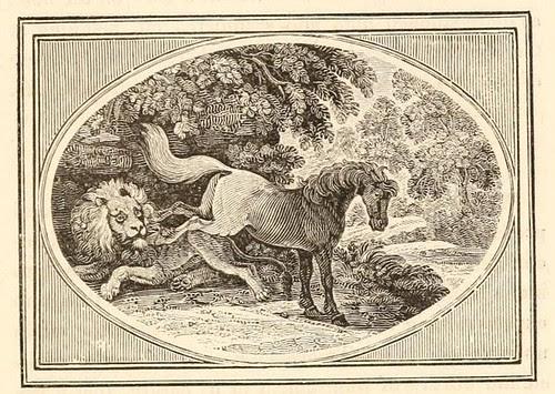 Equus et Leo Medicus