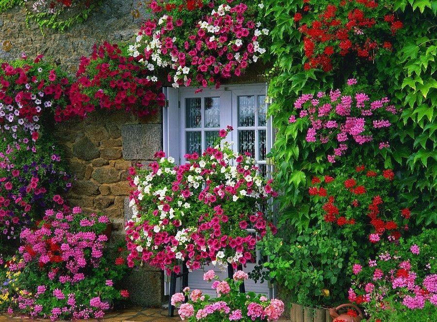 14 Gambar Taman Bunga Depan Kamar Indah  RUMAH IMPIAN