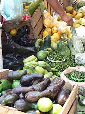 avocats, chayottes et courges.jpg