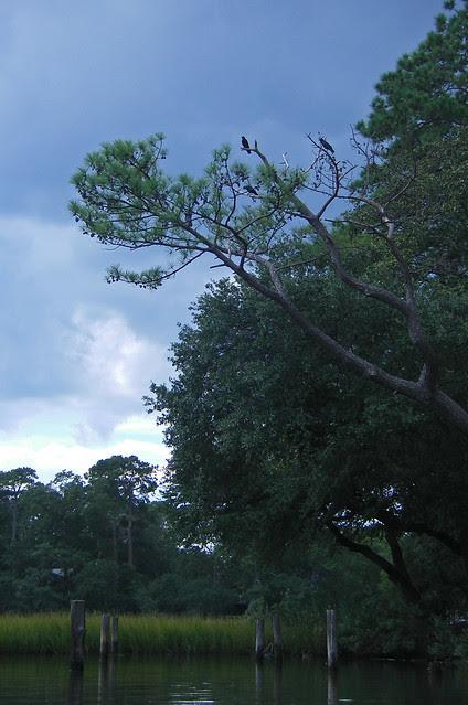 Crow Perch