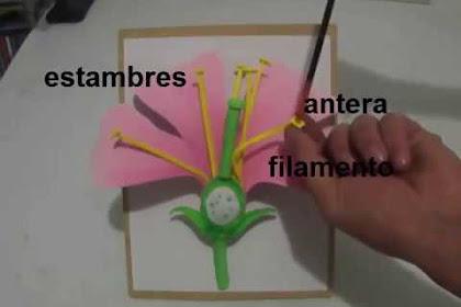Partes De La Flor Para Colorear E Imprimir