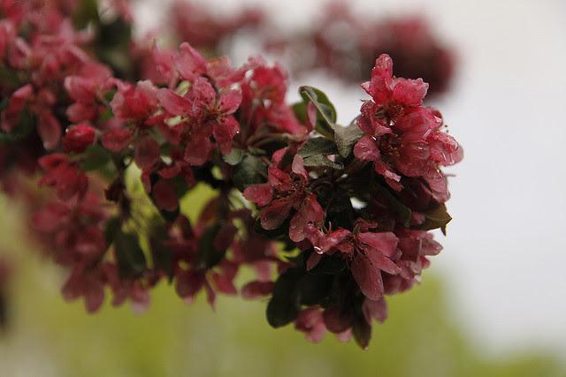 blossomcluster2