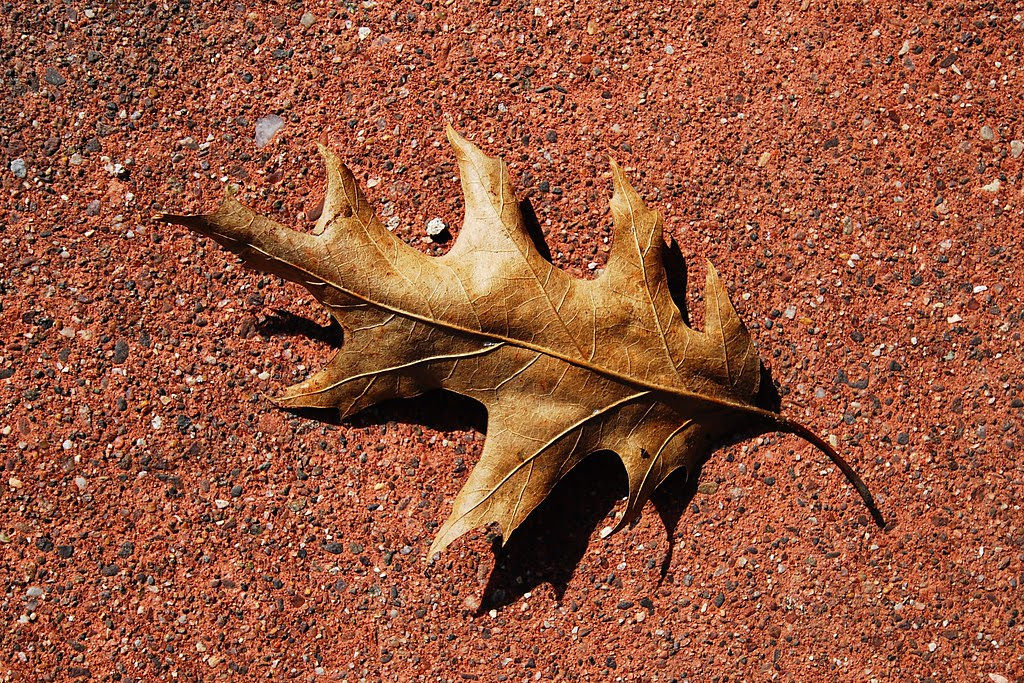 A leaf on a red cement walkway.