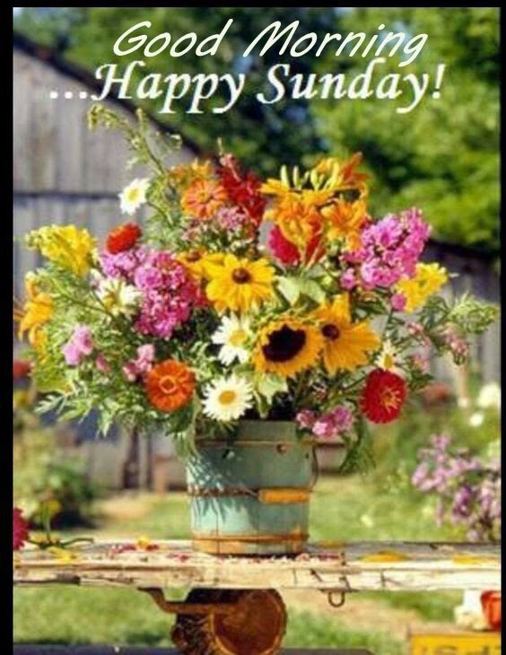 Good Morning Happy Sunday Image With Flowers Pictures Photos And