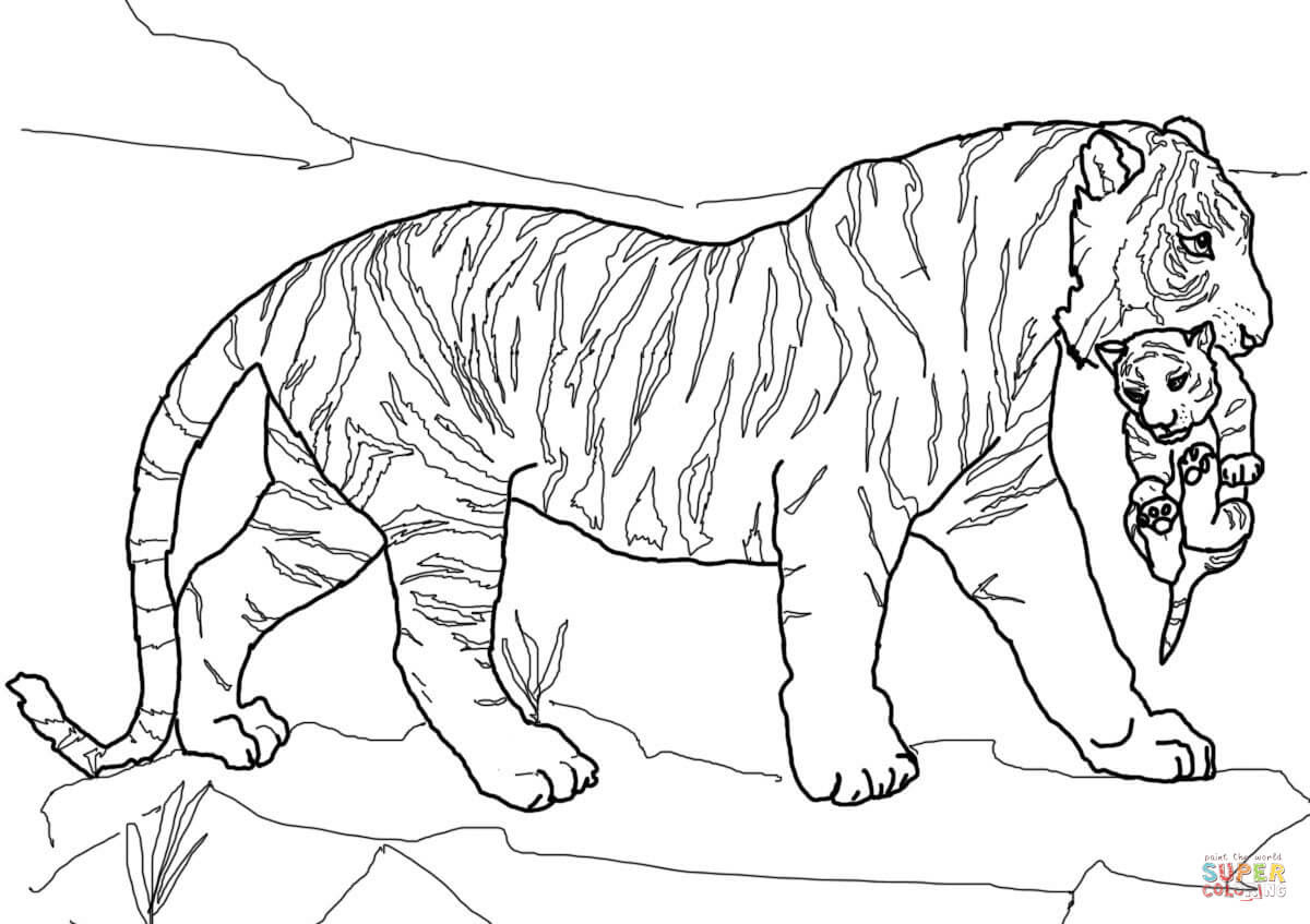 Coloriage Bebe Felin.Unique Coloriage Bebe Tigre A Imprimer Imprimer Et Obtenir Une
