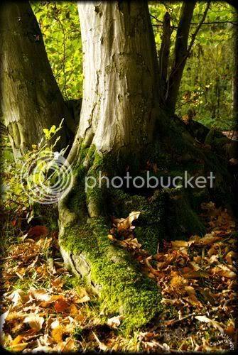arbre tronc racines photo