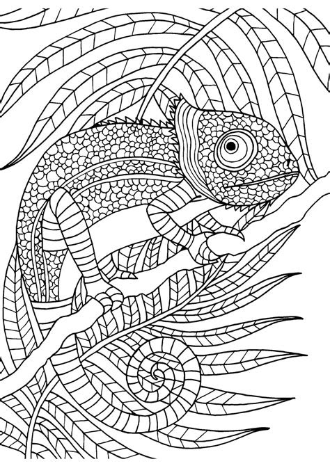 chameleon adult colouring page colouring  sheets art