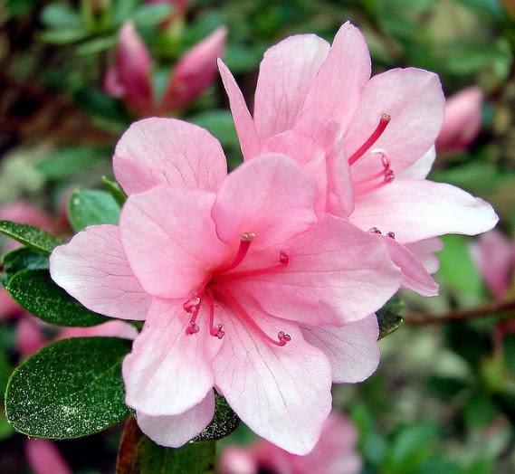 30+ Gambar Bunga Cantik Dan Namanya, Inspirasi Spesial