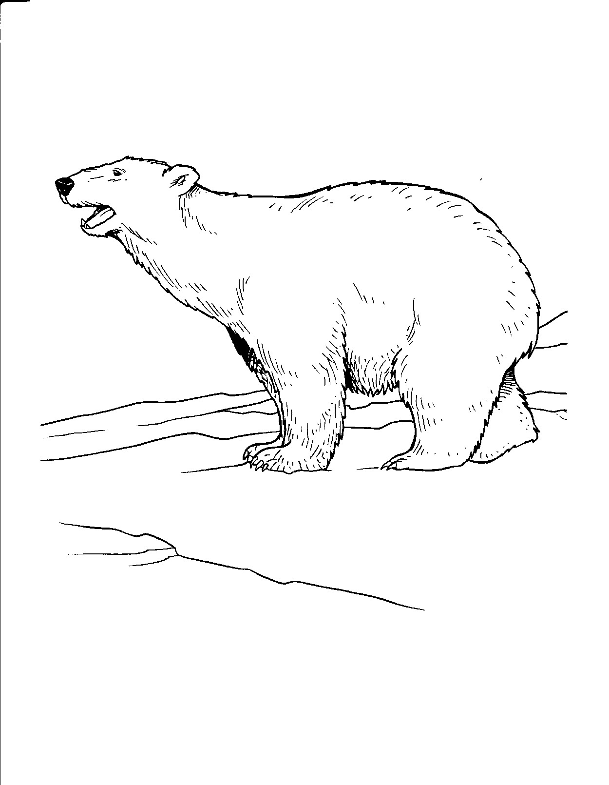 - Coloring Page: Polar Bear Free Printable Downloads From ChoreTell