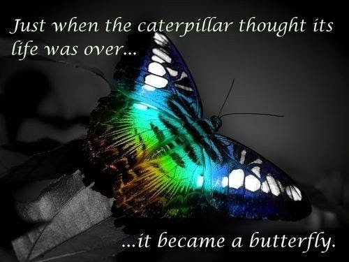 Just When The Caterpillar Thought Its Life Was Over It Became