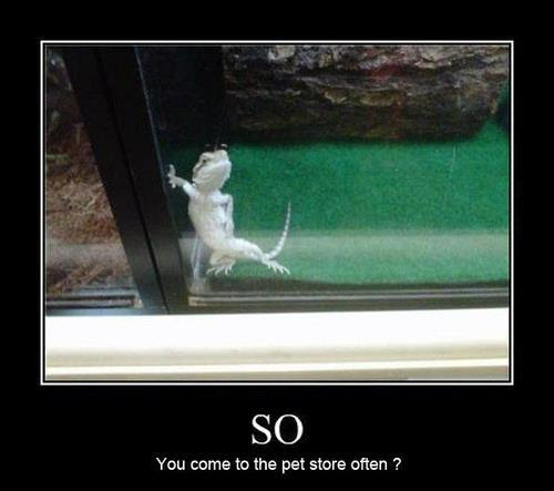 Funny image with captions lizard hitting up person pet store