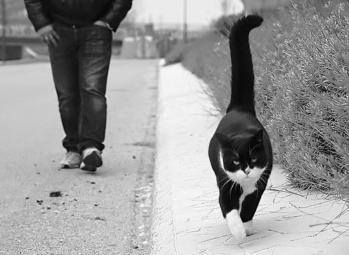 VIP CAT