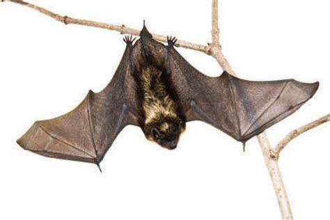 Michigan Bats in a Nutshell