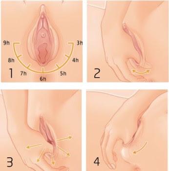perineum sangatlah penting peregangan dan robekan pada perineum selama proses persalinan  Cegah Robekan Perineum dengan Perineum Massage
