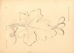 dessin ornement 8