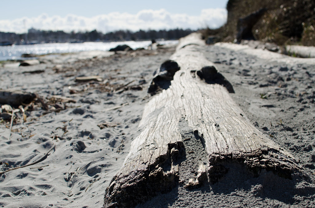 Photo Finish 12 | Driftwood on the Beach | personallyandrea.com