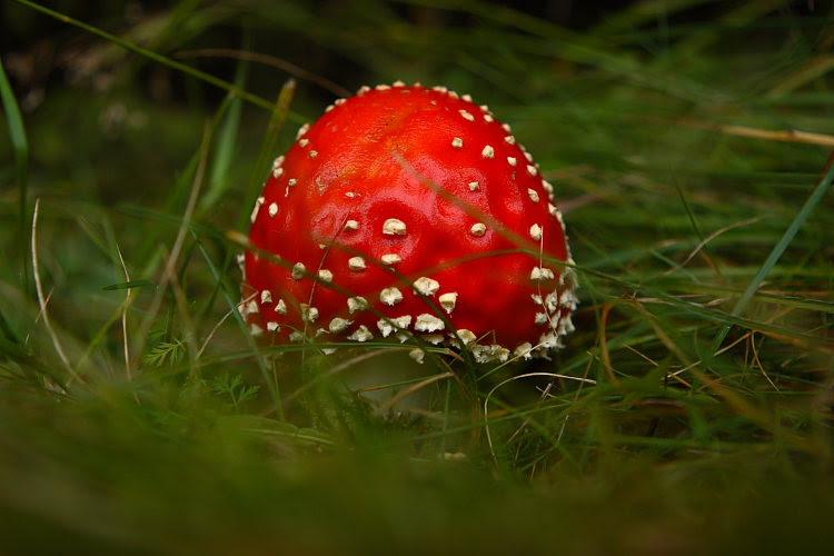 01_Mushrooms