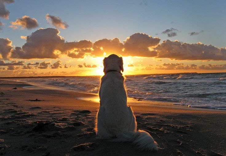 "The Amazing World Of Dogs In ""Dog Enjoys a beautiful sunset"" Photo by Ingrid Brandt"