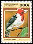 Red-crested Cardinal Paroaria coronata