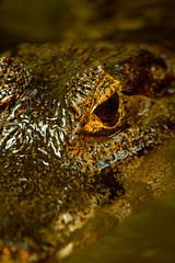 Krokodil Zoo Rostock