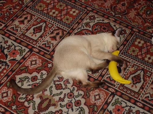 Kitten with a catnip banana