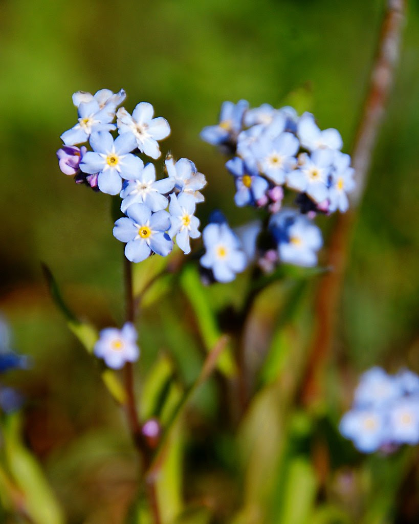 Pretty blue flowers.