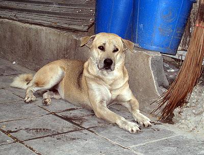 whitedog2