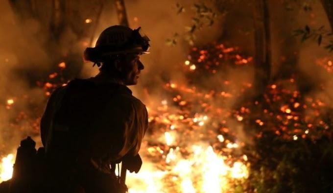 Impresionante operativo logra rescatar a animales de un refugio a punto de morir en un incendio
