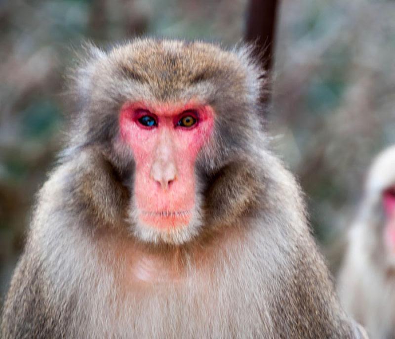 20 animais extraordinariamente belos com olhos ímpares 19