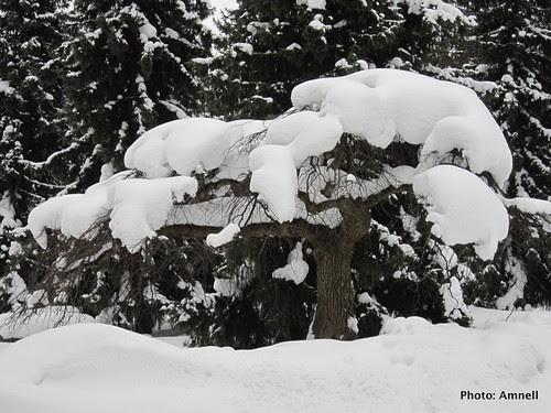 Luminen puu by Anna Amnell