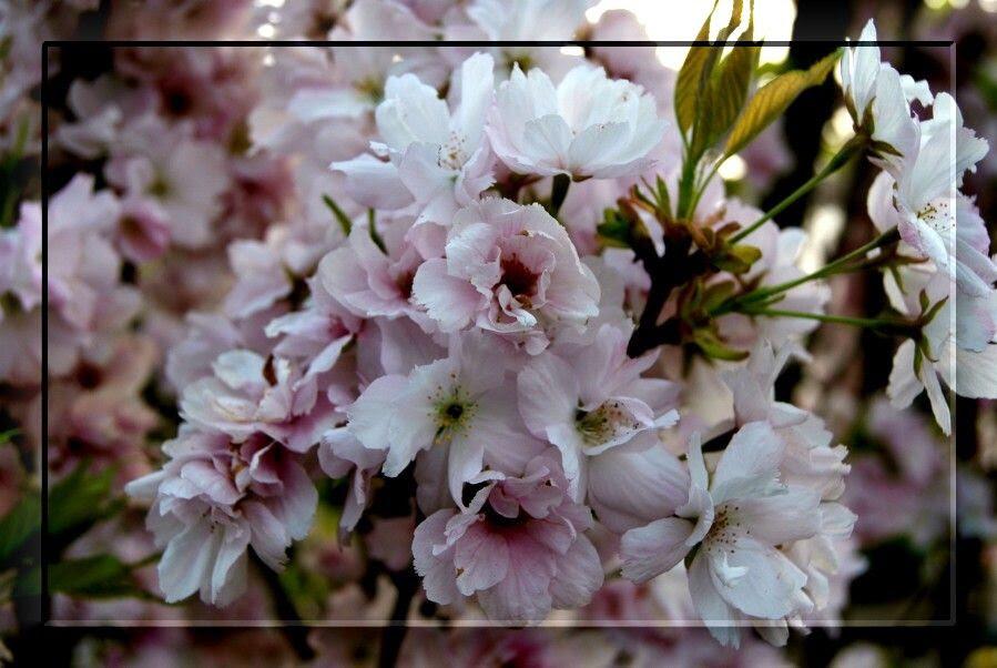 4.30 Spring Flowers