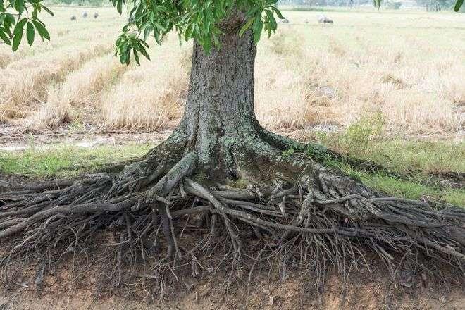 Растения также живые существа, способные принимать решения, помнить и общаться