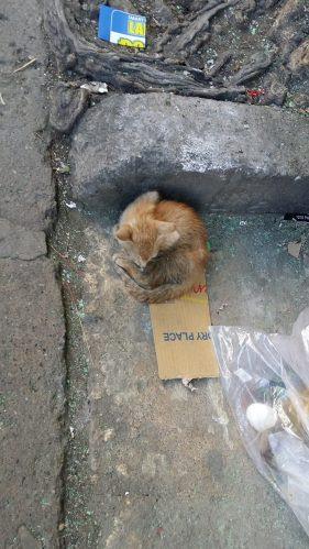 猫さんその1