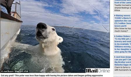 O animal chegou bem perto do barco