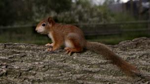 esquilo   Foto: BBC