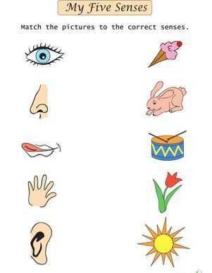 Duyu Organları çalışma Sayfası Okul öncesi Etkinlik Faliyetleri
