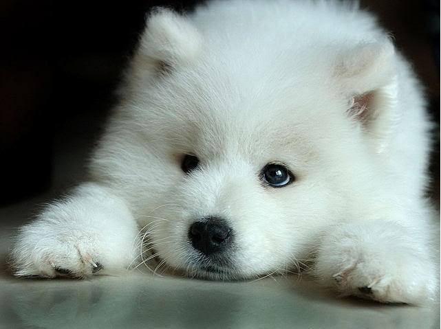 Cute Wolf Cute Wolf Zone Photo 16877321 Fanpop