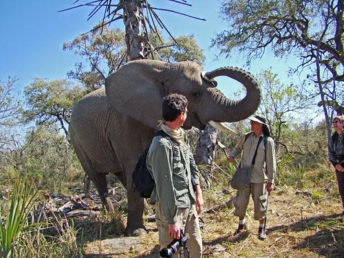 DSC08148 Elephant stealing hat