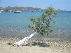 Ελληνικά: Αλμυρήθρα, αλμυρίκι ή αρμυρίκι, σχεδ...