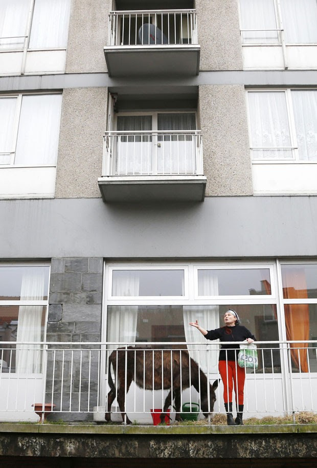 Donos receberam notificação após reclamação de vizinhos (Foto: François Lenoir/Reuters)